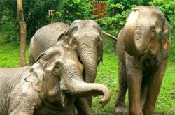 boon lot elephant sanctuary sukhothai thailand