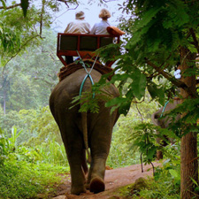mae hong son elephant trek